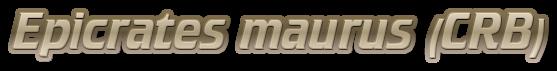 Epicrates maurus (CRB)